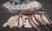 Aboriginal Resource Trail